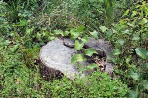How Long Does it Take For A Tree Stump To Rot Away In Melbourne