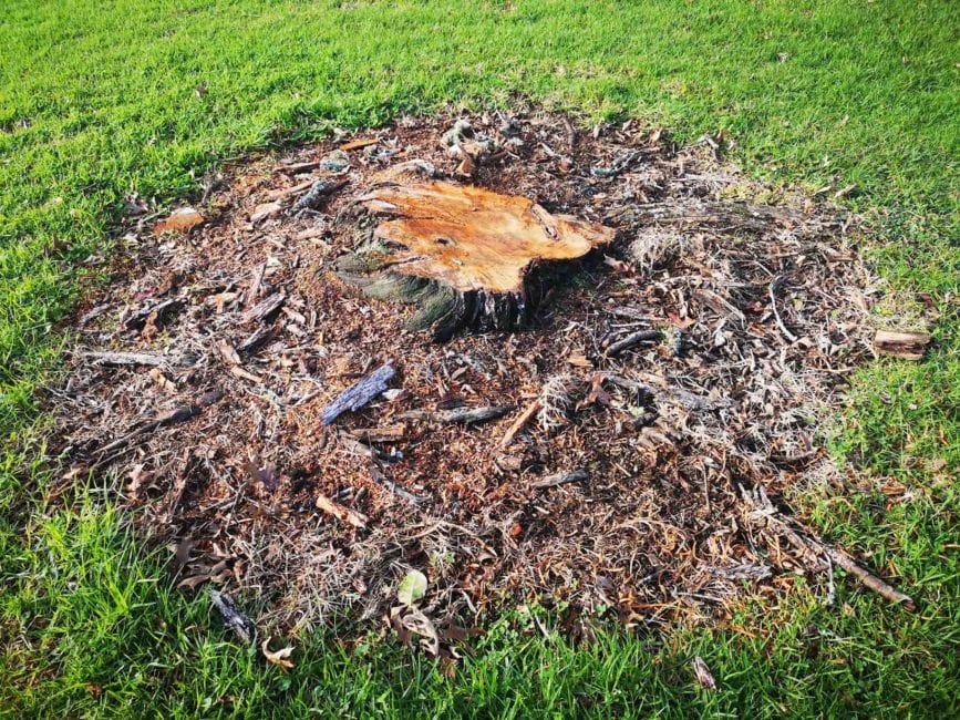 cheap small stump grinding Melbourne