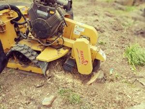 using stump grinding mulch to create soil
