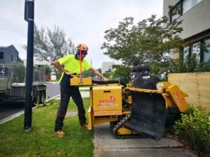 Grinding a tree stump in front garden