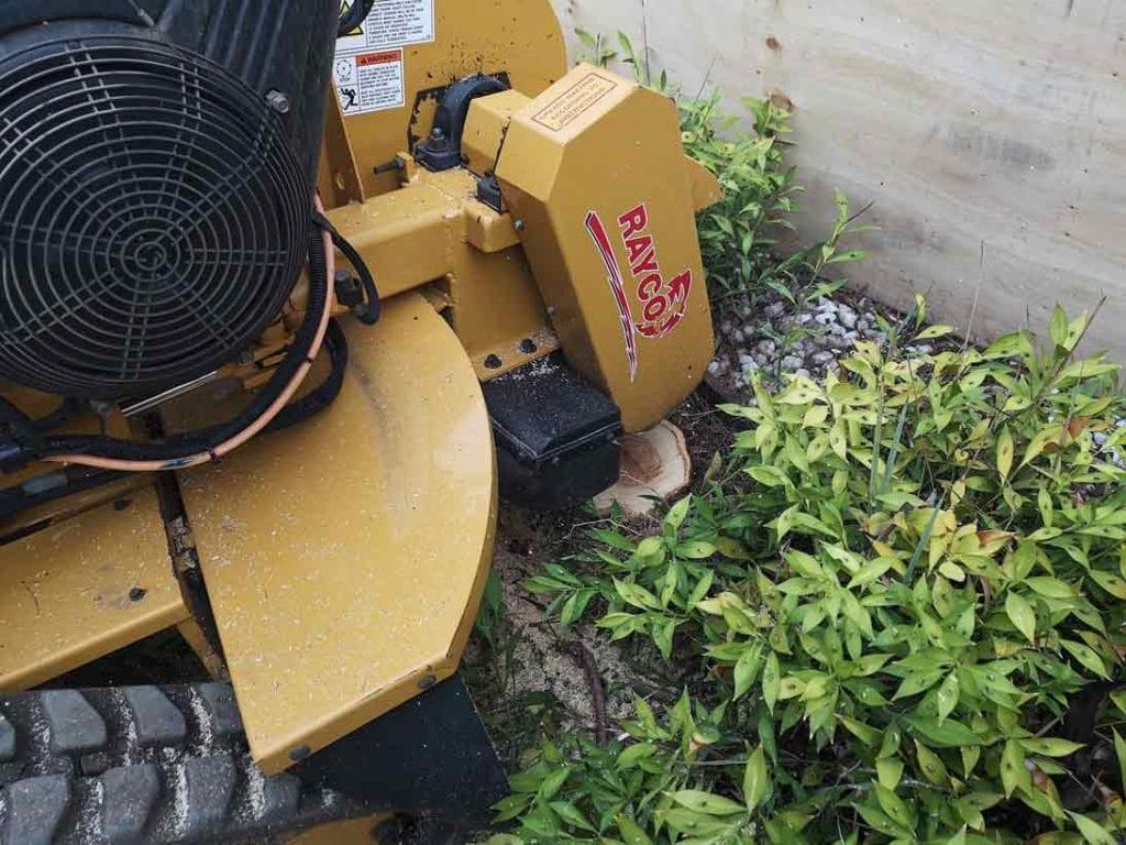 Stump removal in shrub bed