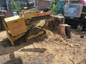 Grinding a big stump in coburg