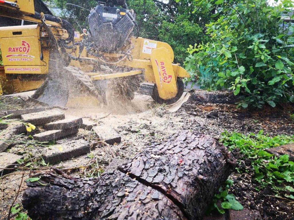 stump grinding in niddrie back garden