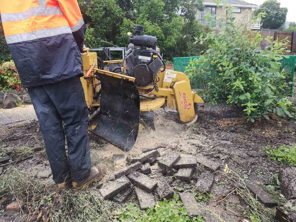 large tree stump being removed in niddrie